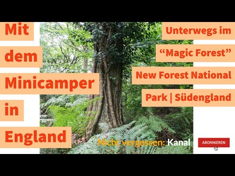 "Unterwegs im ""Magic Forest"" | New Forest National Park | Südengland"