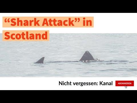 """Reisen: """"Shark Attack"""" in Scotland / """"Hai Attacke"""" in Schottland"""