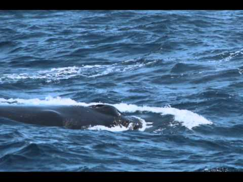 Reisen: Whale Watching Santa Barbara [USA-Reisebericht]