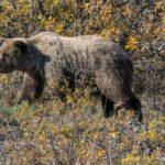 "Reisebericht Wohnmobil 2015 | Kanada / Alaska | Tag 08-10 | Denali Nationalpark und ""Into the Wild"""