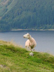 Reisebericht England / Schottland 2008