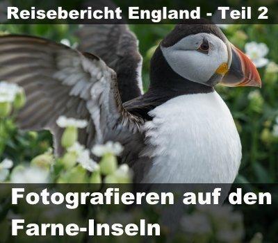 Reisebericht England - Fotofrafieren Farne-Inseln