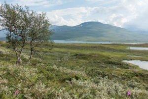 Sarek Nationalpark - Wandern in Schweden
