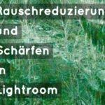 Rauschreduzierung und Schärfen in Lightroom [Tutorial]