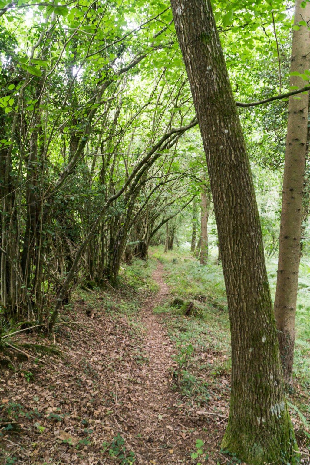 Urwald im New Forest Nationalpark