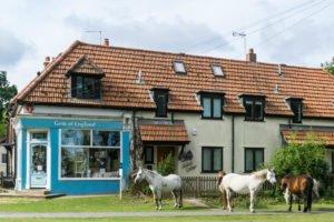 Ponys in Burley