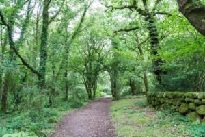 Dartmoor Nationalpark England